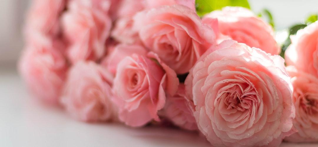 Jenis-Jenis Papan Bunga