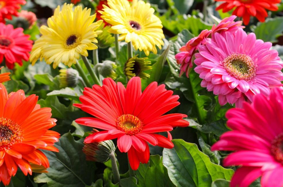 Bunga yang cocok untuk Anniversary