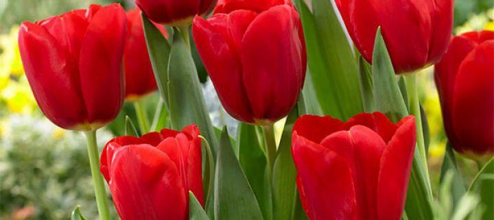 Bunga yang melambangkan Cinta Abadi