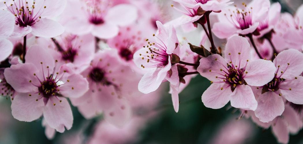 Cara menjaga Bunga tetap Segar