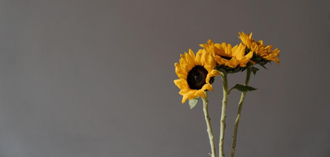 Makna Bunga Matahari