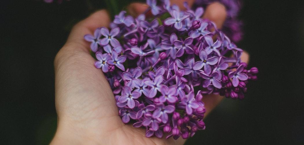 Bunga yang bagus untuk Digantung