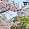 Mengenal Bunga Cantik asal Jepang