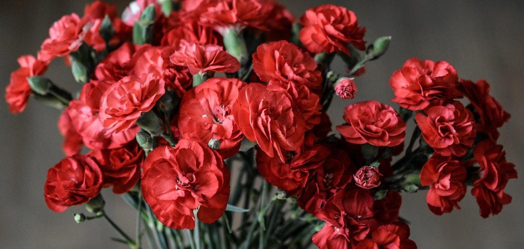 Ini dia 5 Bunga yang bisa Dimakan