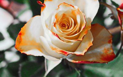 Buket Bunga untuk Ultah Ibu